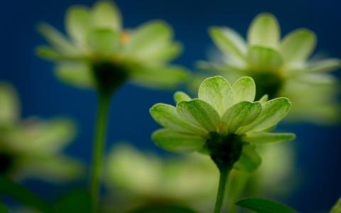 心情,鲜花,花卉,鲜花,新鲜,黄色