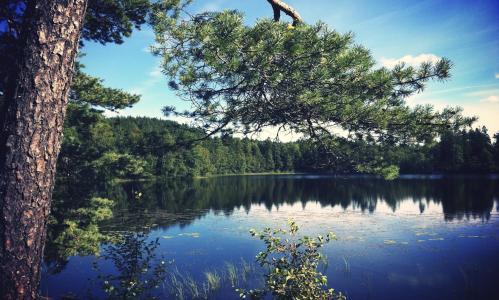性质,钓鱼,森林,湖泊,针,美丽