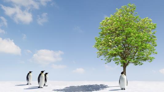 企鹅,雪,灰色的皮毛大衣,绿树