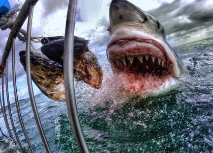 投篮,诱饵,鲨鱼