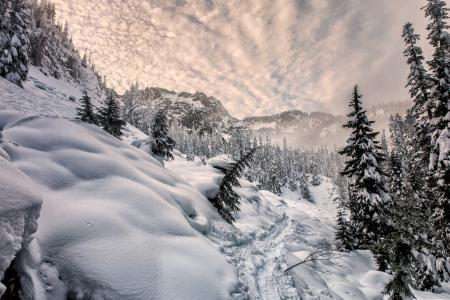 自然,冬天,雪,山,树,云杉,森林