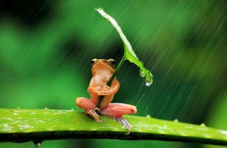 青蛙,性质,雨,伞,伞,绿色,粉红色,芦荟