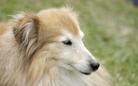 美容,肖像,狗