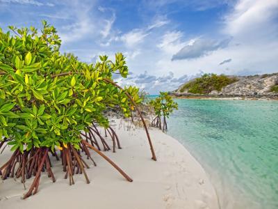 沙子,加洛韦,树木,巴哈马,红树林,红树林,长岛,海滩