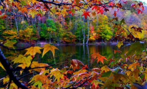 宏,叶子,性质,景观,秋季