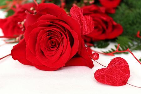 玫瑰,鲜花,心,爱,白色背景,珠,宏