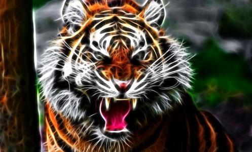 艺术,老虎,猫