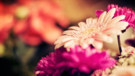鲜花,重点,茎,芽,花,宏,非洲菊