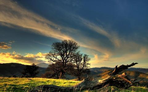 科里格,树木,丘陵,距离