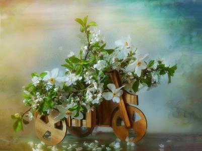 花盆,自行车,树枝,鲜花,樱桃,水仙,春天