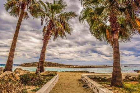 棕榈树,沙滩,大海,岛屿,塞浦路斯