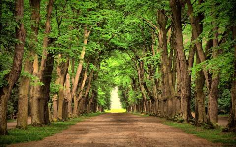 树林,路,树,绿色,叶子,森林