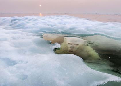 照片,北极熊,熊,捕食者,在水之下,冰,美丽,超级照片