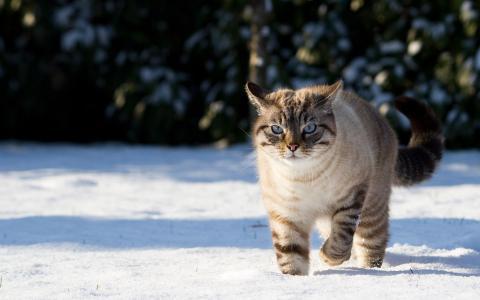 雪,性质,阴影,猫,冬天,猫