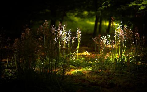 性质,鲜花,光,宏