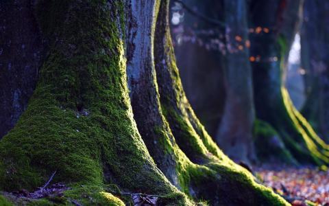 树,性质,青苔,宏