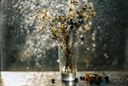 干树枝,浆果,玻璃,窗户,眩光,百合