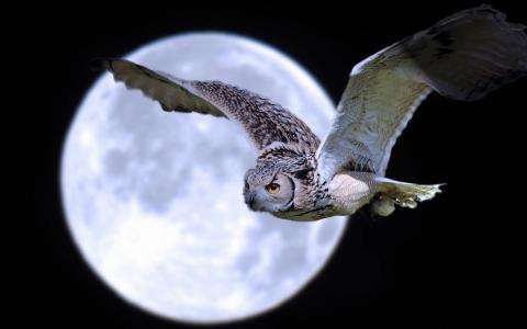 月亮,猫头鹰,夜,天空,飞