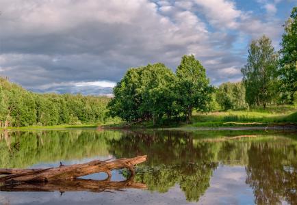 森林湖泊,树木,森林,云,反射,亚历山大Berezutsky