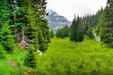 森林,斯洛文尼亚,科巴里德,自然