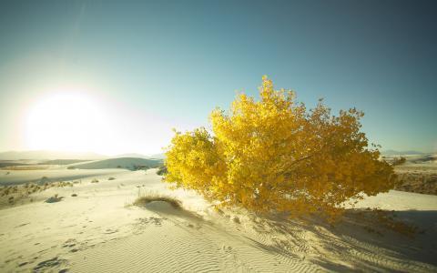 景观,树,沙,沙漠