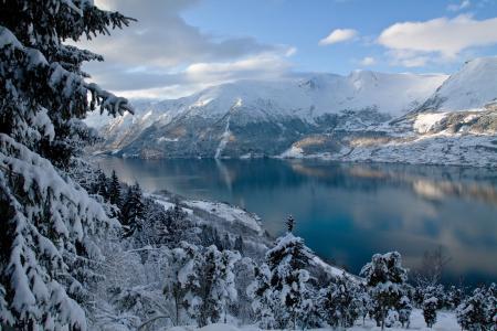 性质,冬天,挪威,山,树,冷杉,森林,峡湾