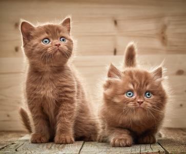 查看,小猫,两个