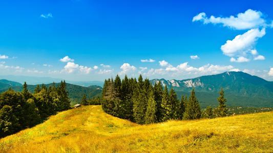 自然,山,森林,镇,美丽