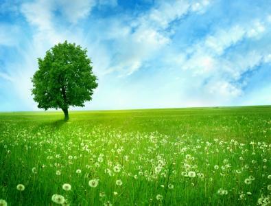 绿色,领域,沉默的树,孤独,格陵兰岛,蒲公英,空间
