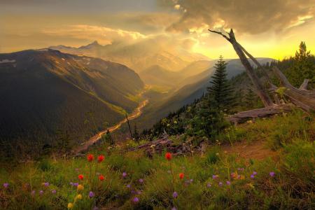 景观,山,丘陵,性质,草地,鲜花,日落