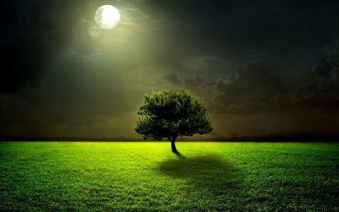 晚上,月亮,月光,满月,草,绿色,树