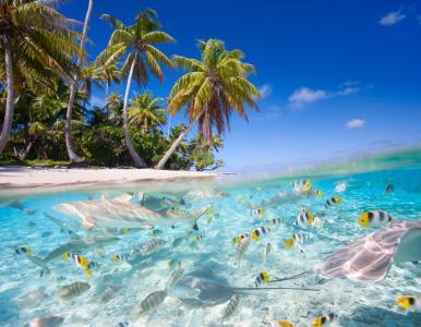热带,自然,海洋,照片,水下,精美