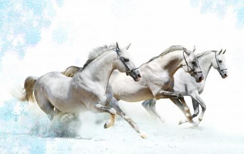 三文鱼,马,灰尘,背景