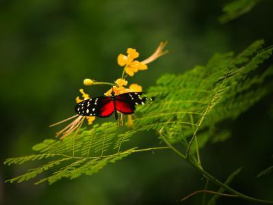 宏,蝴蝶,增长,花卉