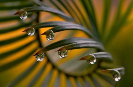 性质,叶子,下降,宏,露水,水
