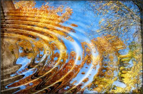 在水的圈子,叶子,秋天