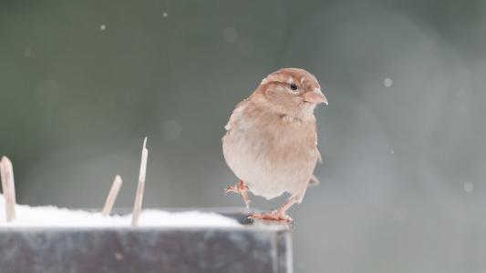 喙,麻雀,羽毛,动物,看,鸟,峰值