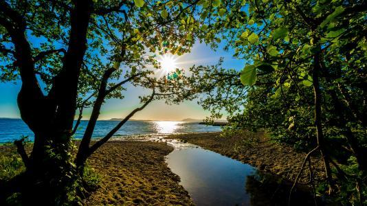 海,夏天,树木,性质