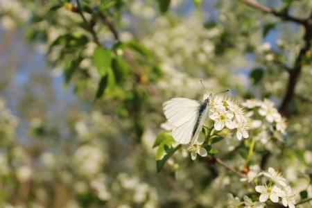 春天,蝴蝶,鲜花