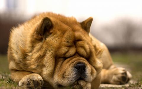 朋友,睡觉时间,狗