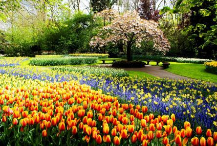 春天,公园,荷兰,郁金香,花圃,积极,美丽