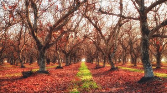 秋天,花园,性质