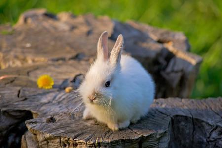 兔子,兔子,小,性质,树