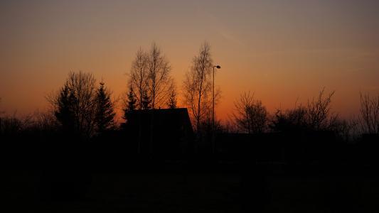 天空,树,晚上,日落