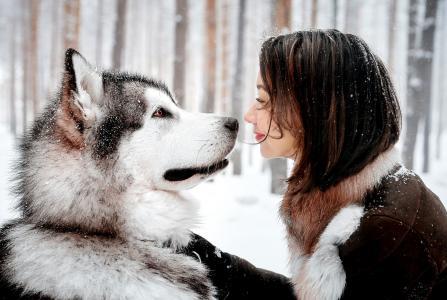 照片,性质,冬季,狗,哈士奇,女孩,积极,朋友,创意,宏观照片主题