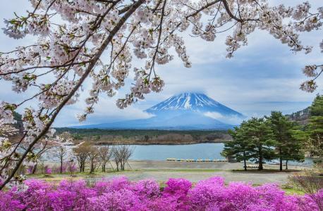 山,湖,树,全景,美女,樱花