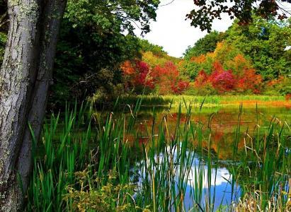 性质,秋季,池塘,美丽,公园,钓鱼
