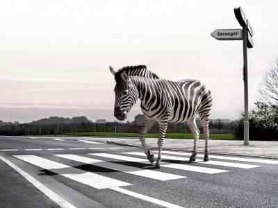 斑马,路,沥青
