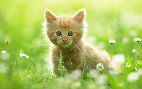 草地,小猫,草