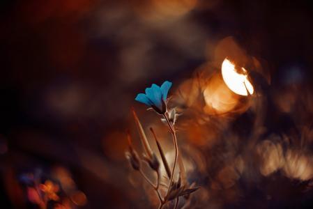 宏,植物,花,性质,多彩